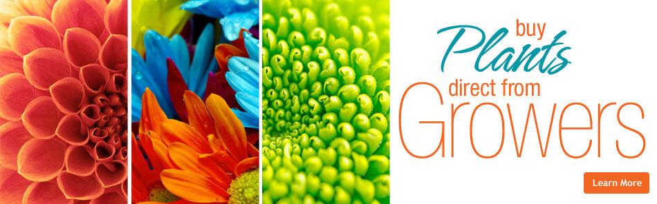 FHGS-Slider-Plants